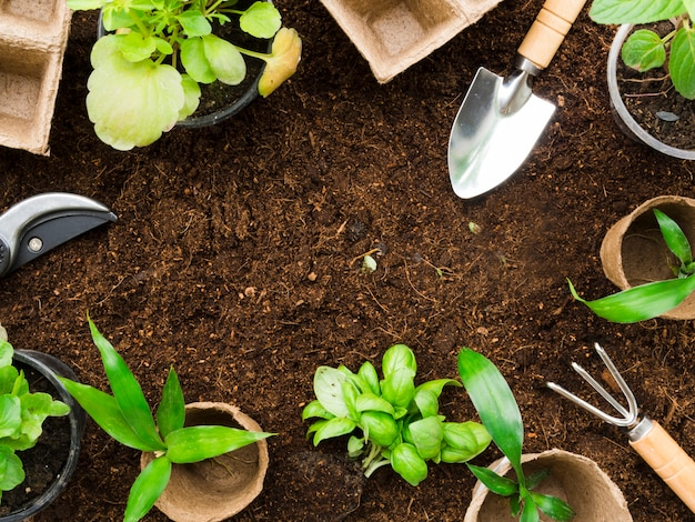 Vista superior de ferramentas e plantas de jardinagem Foto gratuita
