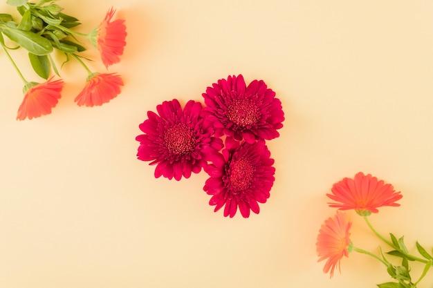 Vista superior de flores coloridas Foto gratuita