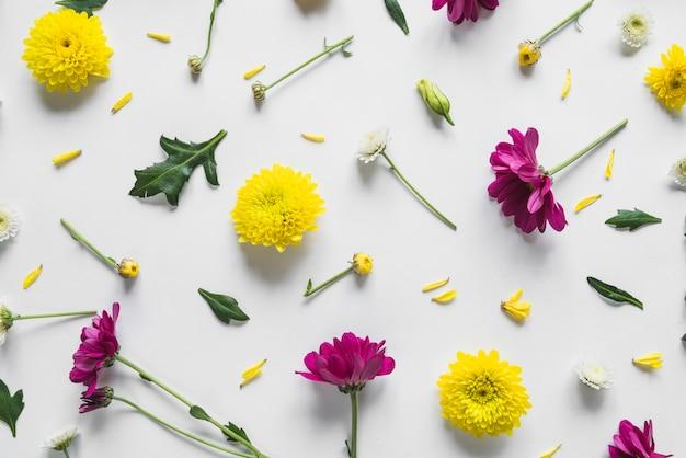 Vista superior, de, flores, e, folhas Foto gratuita