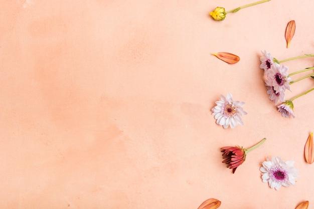 Vista superior de margaridas multicoloridas com espaço de cópia Foto gratuita