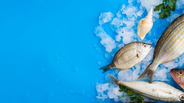 Vista superior de peixes frescos em cubos de gelo Foto Premium