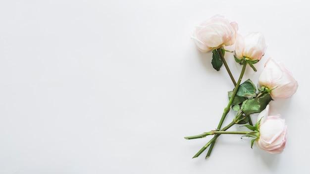 Vista superior, de, rosas brancas Foto gratuita