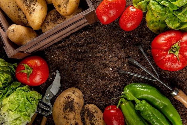 Vista superior de tomates com batatas e vegetais Foto gratuita