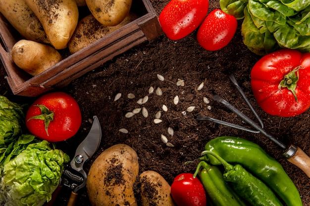 Vista superior de vegetais com sementes e salada Foto gratuita