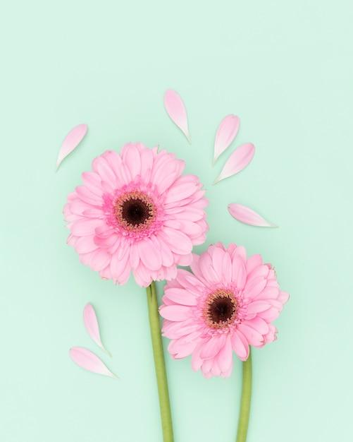 Vista superior decoração com flores cor de rosa Foto gratuita