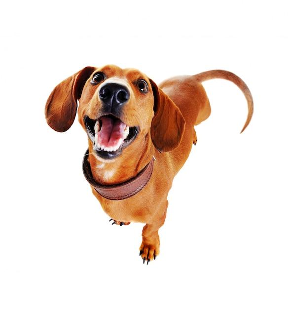 Vista superior de um cachorro com coleira no fundo branco como adestrar um cachorro
