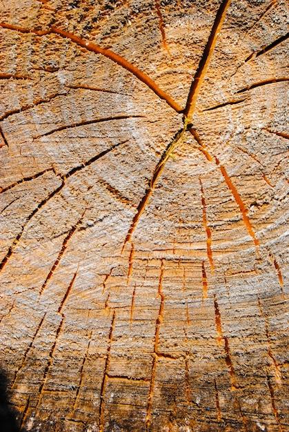 Vista superior do coto velho usado como um assento de descanso. textura de madeira Foto Premium