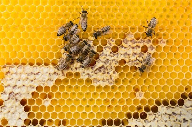 Vista superior do favo de mel Foto gratuita