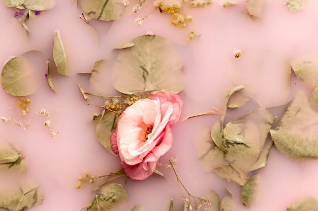 Vista superior flor rosa e pálidas folhas na água cor-de-rosa Foto gratuita