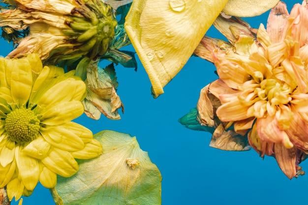 Vista superior flores amarelas em close-up de água Foto gratuita