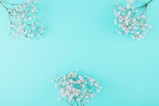 Vista superior flores brancas Foto gratuita