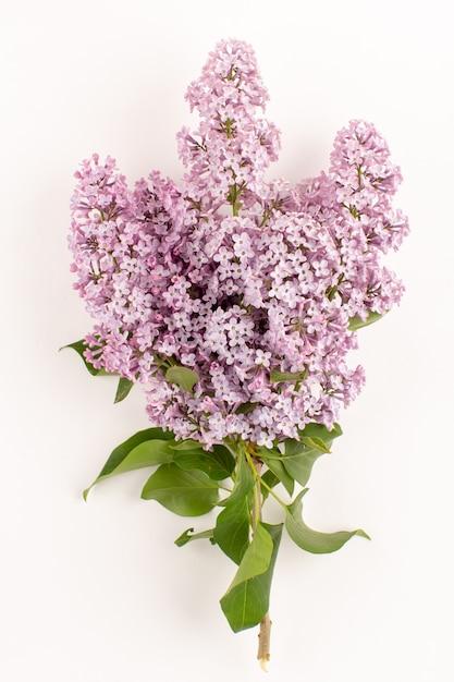 Vista superior flores roxo bonito isolado no chão branco Foto gratuita