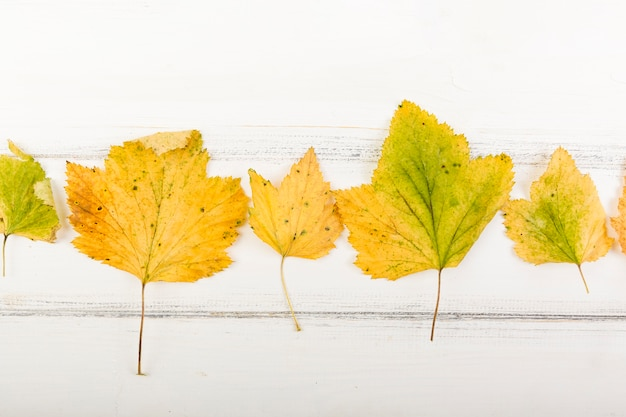Vista superior folhas amarelas de outono Foto gratuita