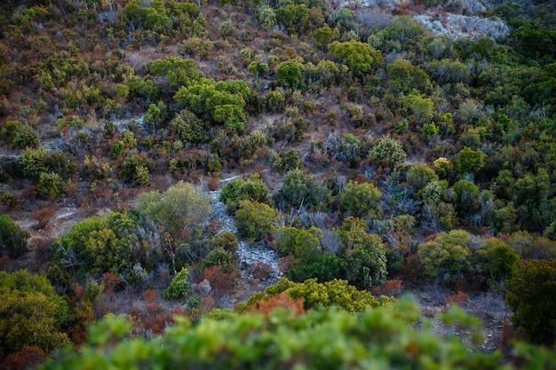 Vista superior, incrível fundo de natureza. a cor da bela vegetação de uma ilha de corsina. Foto Premium