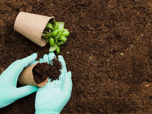 Vista superior mãos manipulando planta Foto gratuita
