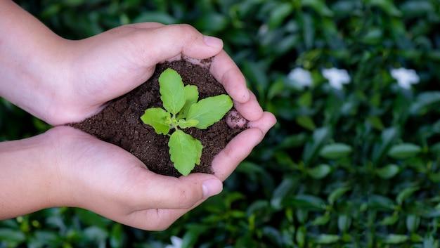Vista superior mãos segurando uma planta jovem em pano de fundo natural Foto Premium