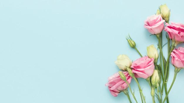 Vista superior mini rosas com cópia-espaço Foto Premium