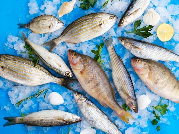 Vista superior mistura de peixes frescos em cubos de gelo Foto gratuita
