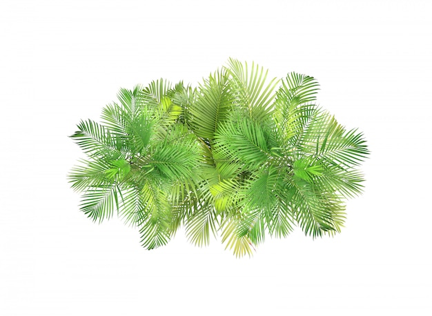 Vista superior, palma, deixa, árvore, isolado, branco, fundo Foto Premium