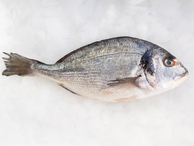 Vista superior peixe fresco na mesa com cubo de gelo Foto gratuita