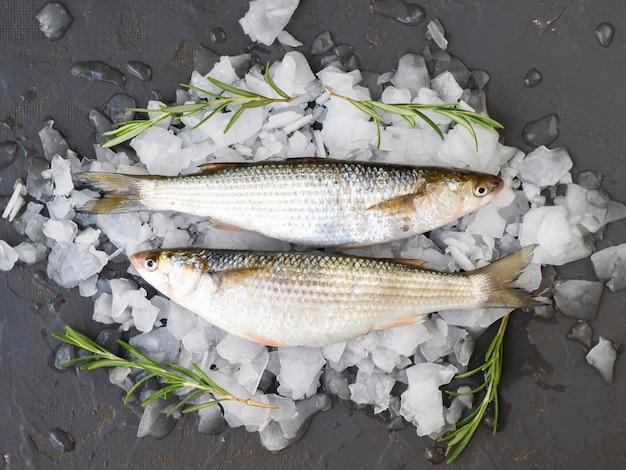 Vista superior peixes deitado em cubos de gelo Foto gratuita