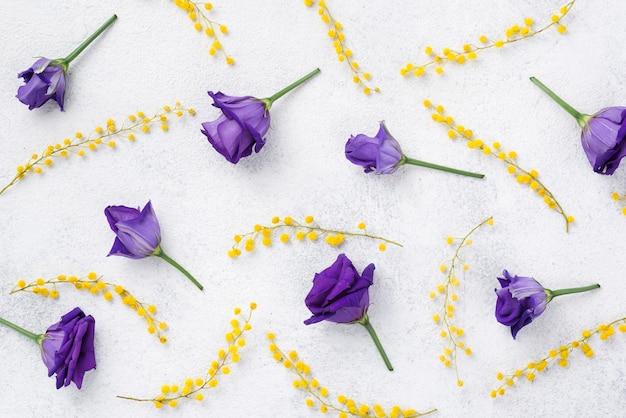 Vista superior roxo primavera flores Foto gratuita