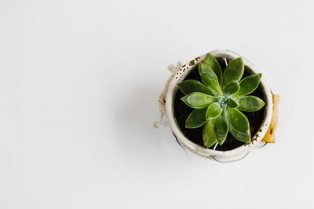 Vista superior suculenta em um vaso de flores Foto gratuita