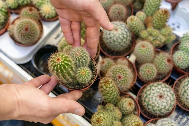 Vista superior variedade de cactos em vasos Foto gratuita