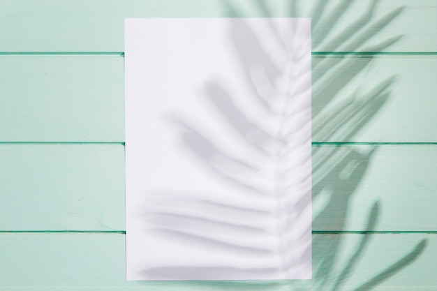 Vista superior vazia de papel branco e deixa sombra Foto gratuita