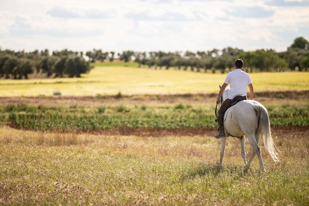 Vista traseira do jovem macho cavalo branco no prado gramado em dia nublado na zona rural Foto Premium