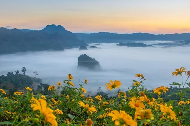 Vistas da montanha e da flor do parque nacional de phu langka, tailândia Foto Premium
