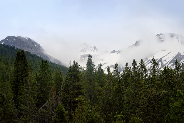Vistas panorâmicas do parque nacional suíço com uma estrada no dia de mola ensolarado. Foto Premium