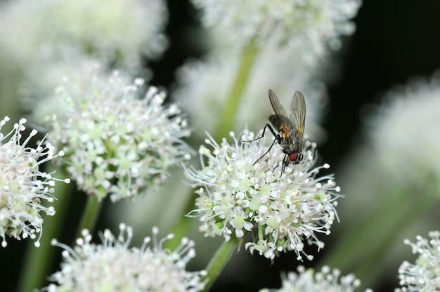 Voar sentado em uma flor Foto Premium