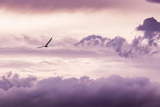 Vôo da gaivota com fundo das nuvens Foto gratuita