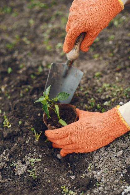 Womans mãos em luvas plantar planta jovem Foto gratuita