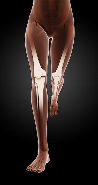 3D render von weiblichen medizinischen Skelett Beine laufen ...