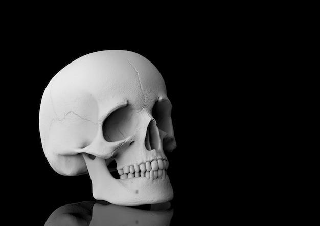 3d-rendering. ein menschlicher kopfschädelknochen mit reflexion auf schwarzem. Premium Fotos