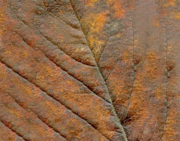 Abstrakte blattadern. brown-herbsturlaubabschluß oben. Premium Fotos