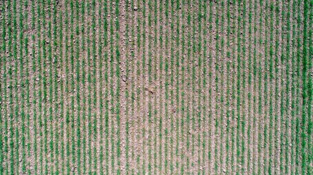 Abstrakte geometrische formen von landwirtschaftlichen paketen von verschiedenen ernten in den gelben und grünen farben. luftbild schießen von drohne direkt über dem feld Premium Fotos