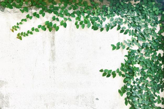 Abstrakter betriebswandhintergrund, die grüne kriechpflanzenanlage mit kleiner gelber blume auf alter hausmauer des schmutzes Premium Fotos