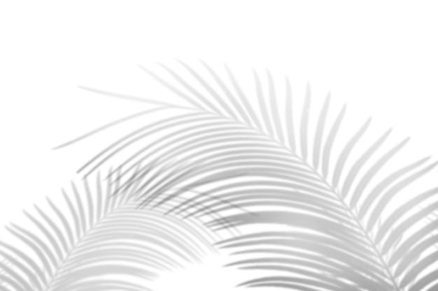 Abstrakter palmblattschatten auf weißem wandhintergrund. leerer kopierplatz. Premium Fotos