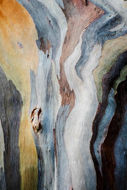 Abstraktes hintergrundmuster der bunten eukalyptus deglupta baumrinde Premium Fotos