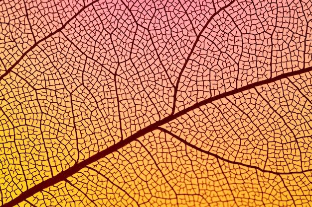 Abstraktes orange herbstblatt Kostenlose Fotos