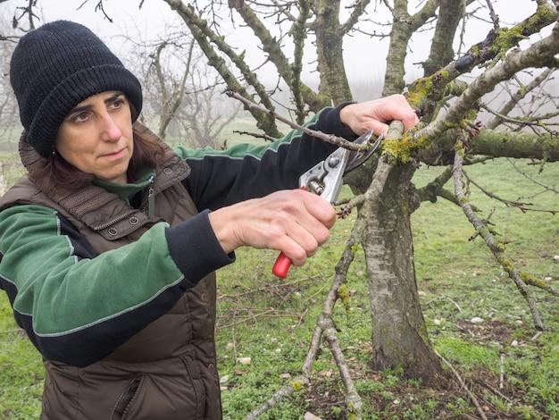 Ältere frau mit wollmütze beschneidet obstbäume mit schere an einem nebligen tag Premium Fotos