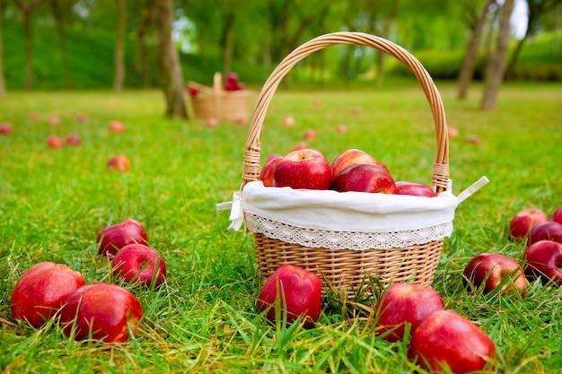Äpfel im korb auf einer rasenfläche Premium Fotos