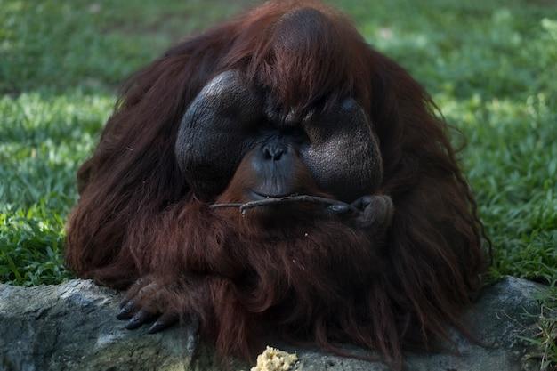 Affe Kostenlose Fotos