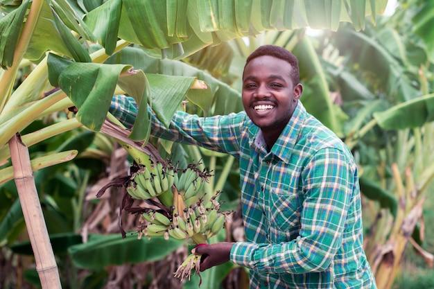 Afrikanischer landwirt, der grüne banane auf bauernhof hält Premium Fotos
