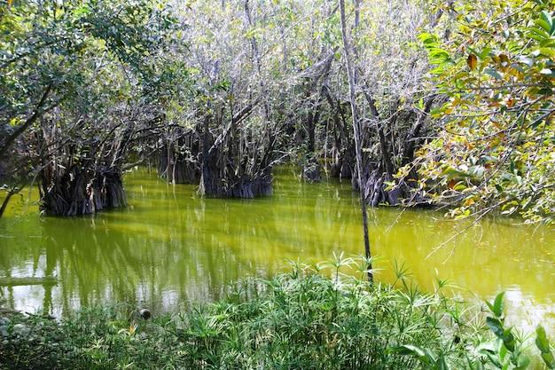 Aguada cenote in mexiko maya riviera dschungel Premium Fotos