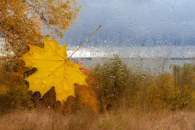 Ahornblatt auf dem nassen glas mit tropfen nach regen Premium Fotos