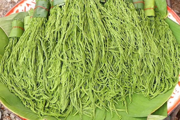 Akazie pennata am markt Premium Fotos